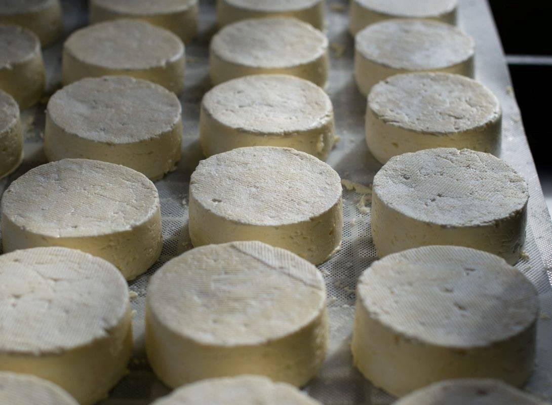 grandi-formaggi-caglio